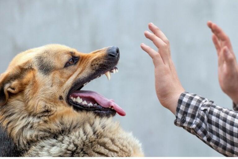 Dlaczego mój pies nie pozwala się dotykać?