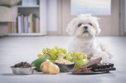 Czy psy mogą jeść orzechy?