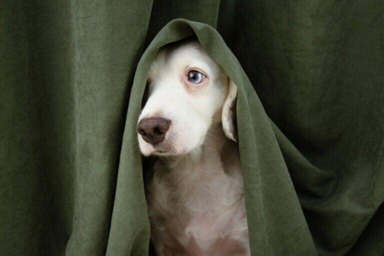 Mój pies ukrywa się przede mną i jest dziwny: co mam zrobić?