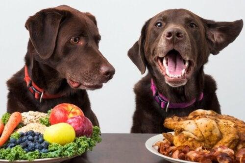 Psy nad talerzem z jedzeniem