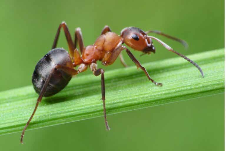 Roztocza w mrowisku: jak się ich pozbyć?
