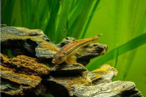 Ryba w akwarium