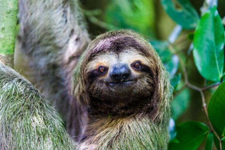 Dlaczego leniwce są tak powolne?
