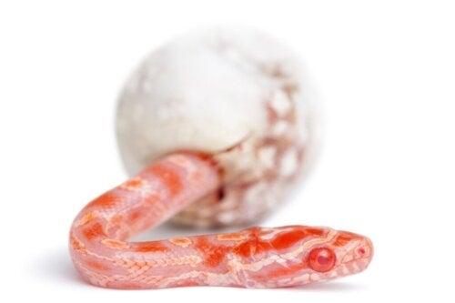 Jak rodzą się węże?