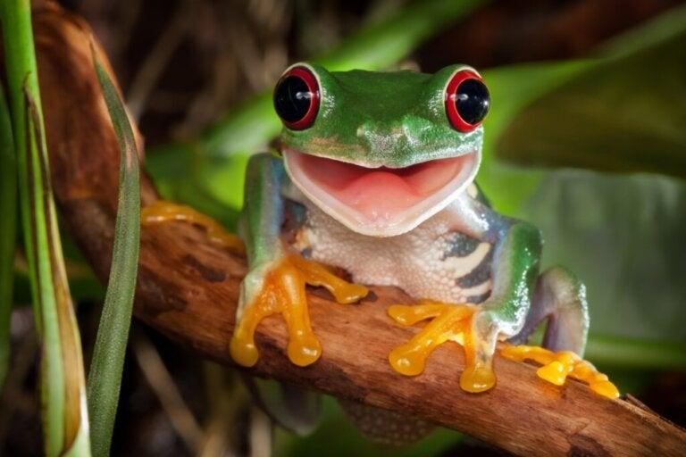 Najpiękniejsze i najrzadsze oczy w świecie zwierząt
