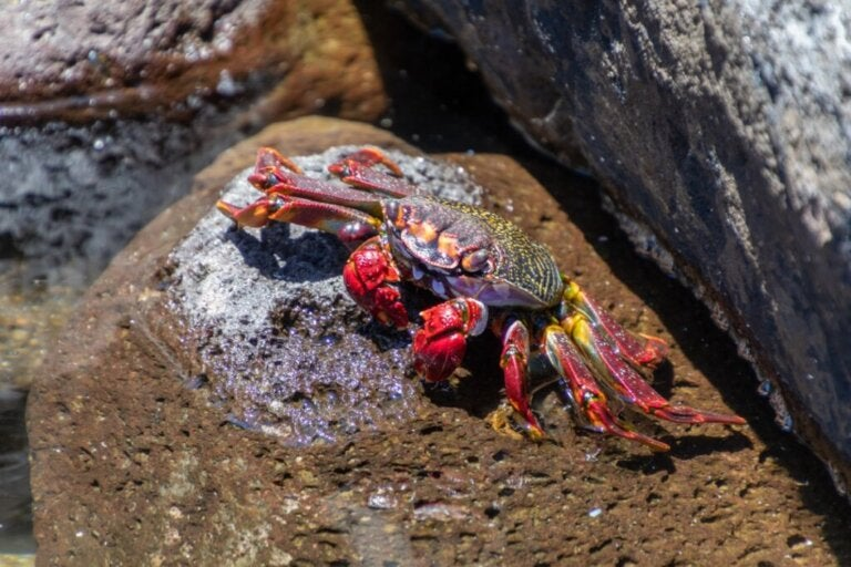Jak oddychają kraby?