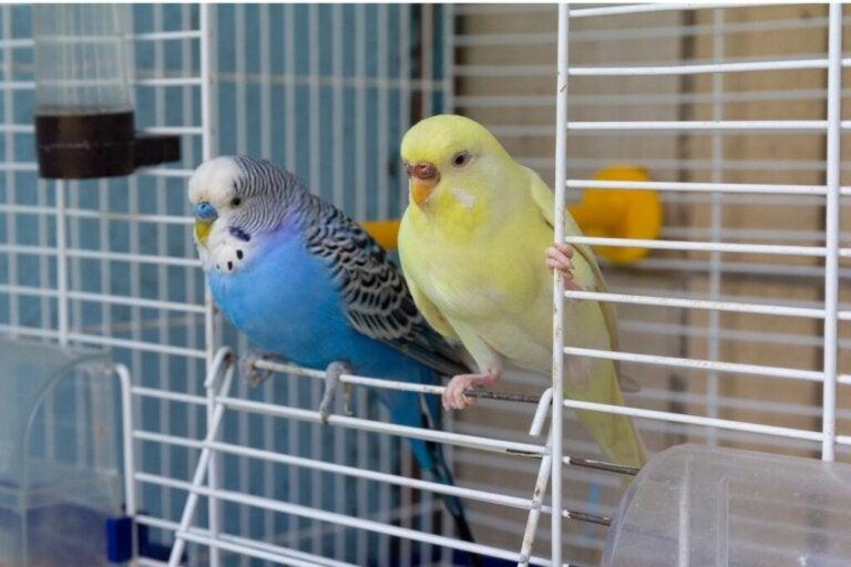 Mój ptak uciekł: co mogę zrobić?