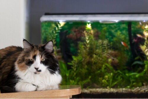 Kot spogląda na akwarium