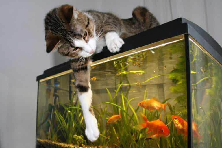 Czy koty mogą żyć z rybami?