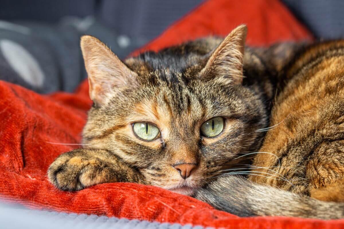 Kot zawinięty w koc