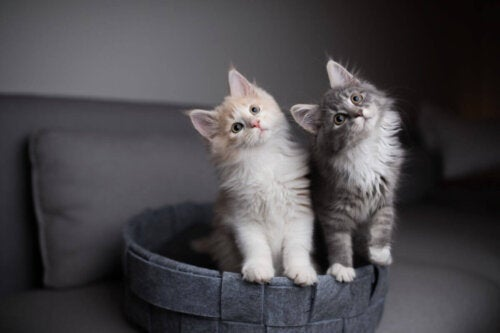 Koty patrzą z zaciekawieniem