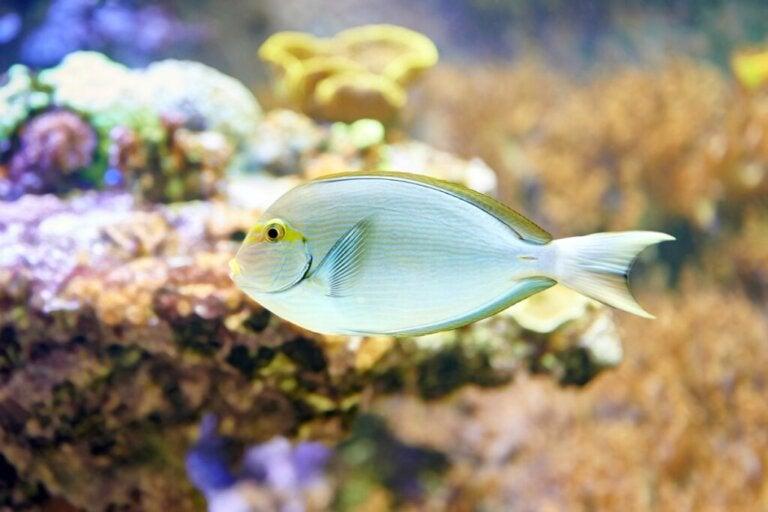 Co jedzą ryby?