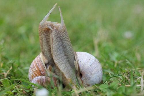 Ślimak wypuszcza rogi