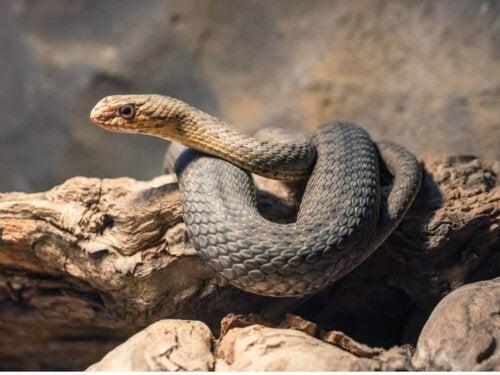 Wąż na skale