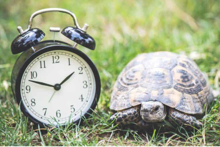 Ile lat żyje żółw domowy?