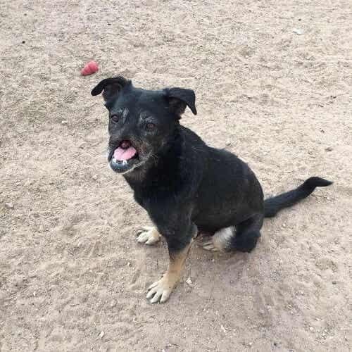 Möt Anubis, hunden som räddades av en familj 11,000 km bort