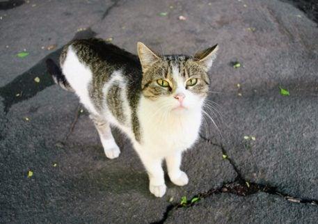 En övergiven katt