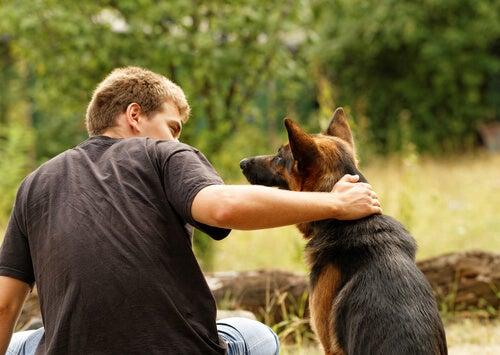Lugn hund med ägare