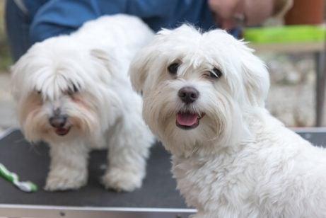 3 grundläggande tips för att ta hand om din hund