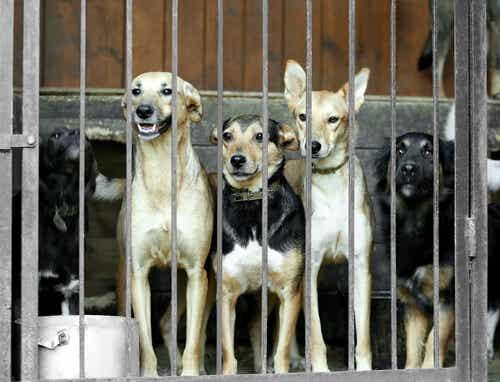 Sydkorea stänger den största marknaden för hundkött