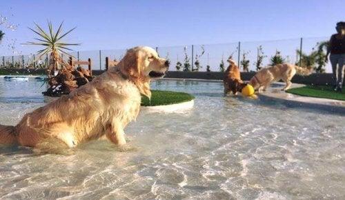 Teneriffa öppnar Europas lyxigaste hundhotell