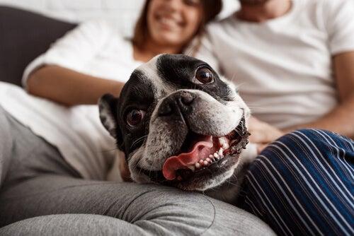 Att behandla hundar som människor är misshandel