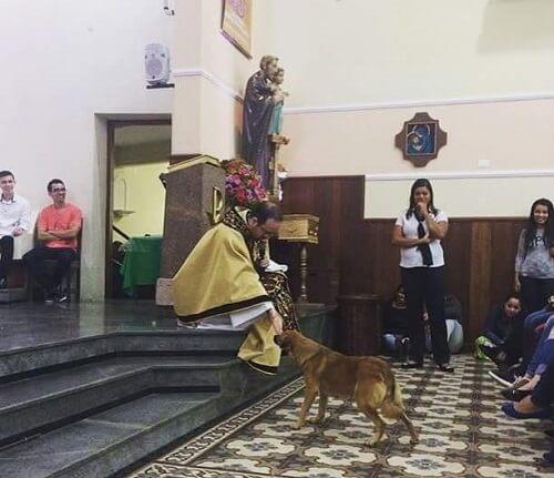 En lektion i djurhantering: gatuhund i en kyrka