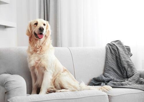 Hund som sitter i soffan