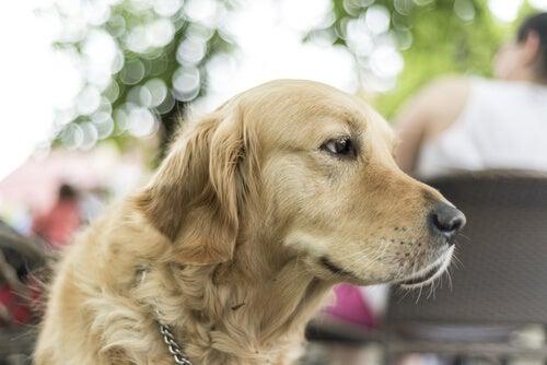 5 anledningar till varför du bör adoptera en stor hund
