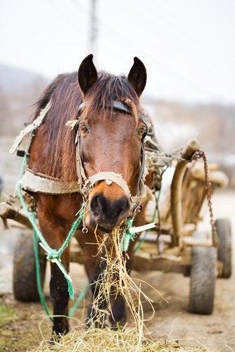 Häst tvingas dra vagn