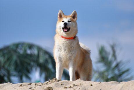 Hälsofördelarna med olivolja för hundar