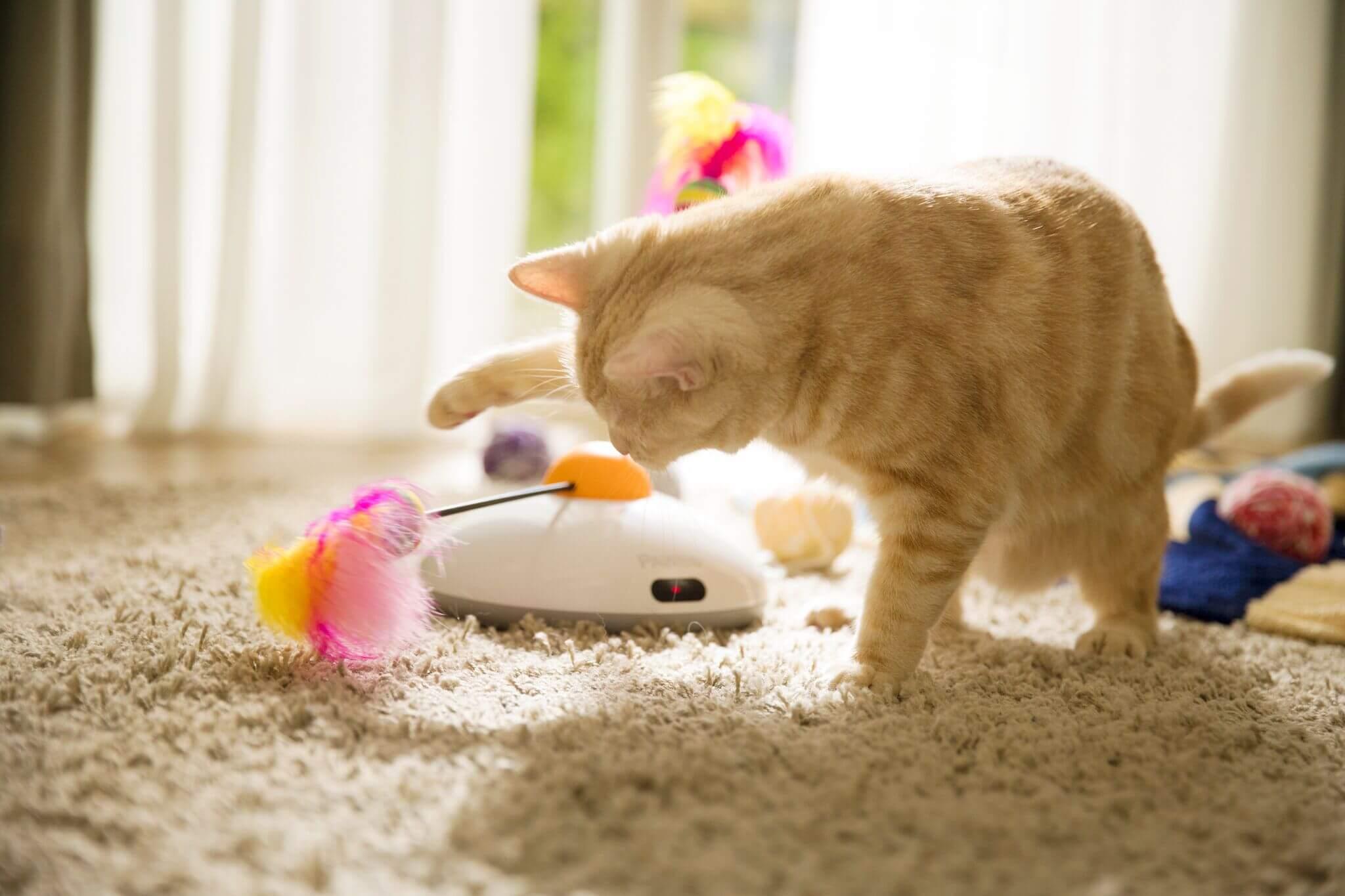 Katt leker med Pawbo Catch