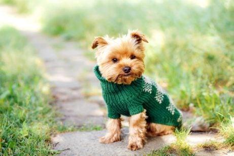 Namngivning: perfekta namn för små hundar