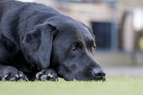 Vanliga sjukdomar hos äldre hundar att akta sig för