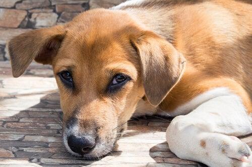 En gatuhund som ligger ner