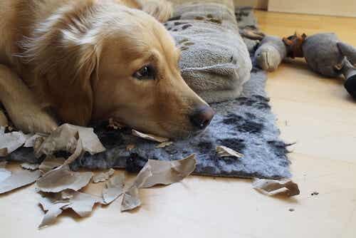 Tips för att vänja din hund att vara ensam hemma