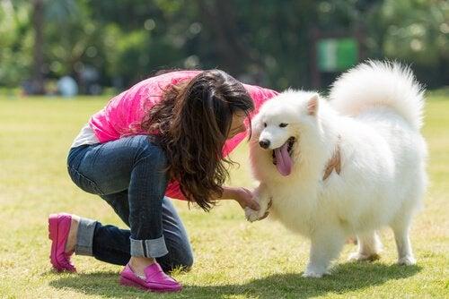Reflektion om husdjur: människans bästa vän är hunden