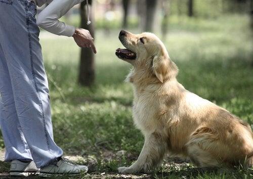 Hund som tittar mot ägare
