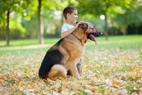 Vilka hundraser visar mest tillgivenhet?