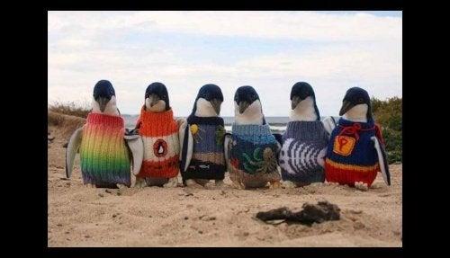 109-årig man stickar små tröjor åt pingviner