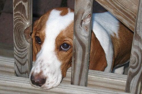 6 tecken på en rädd hund och hur man visar stöd