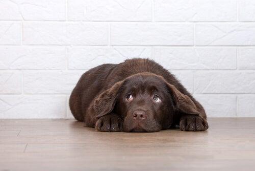 6 orsaker till varför du inte ska bestraffa hundar