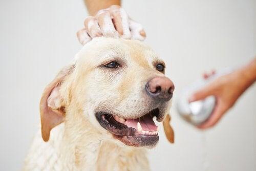 Hund blir badad