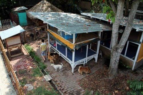 happy animals club djurhem