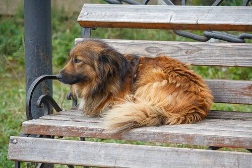 Hemlösa hundar: en sorglig verklighet utan slut