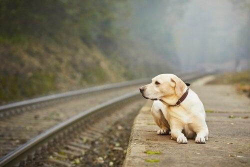 Hur kan man överge ett husdjur?