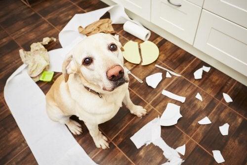 5 tips för att förhindra beteendeproblem hos din hund