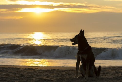 Hur länge bör man vänta med att skaffa ett nytt husdjur?