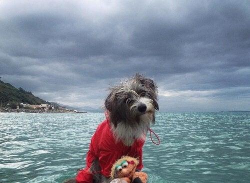 En hund som älskar havet: möt fantastiska Nirvana