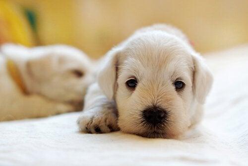Lär dig om fördelarna med olivolja för husdjur
